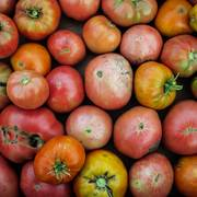 Generating electricity with tomato waste